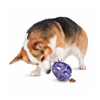 Dog accessories- Busy Buddy Kibble Nibble