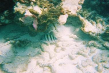 Snorkeling in Key Largo