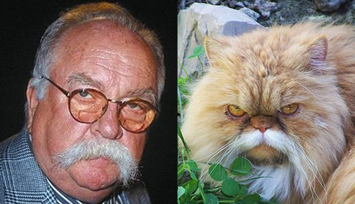 cats who look like famous people 1 Wilford Brimley