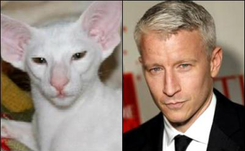 cats who look like famous people 6 anderson cooper