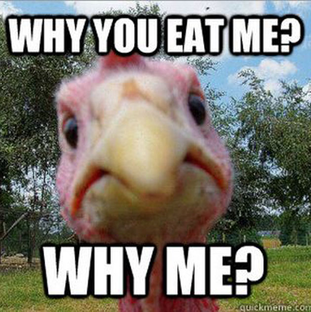thanksgiving meme 016 why you eat me