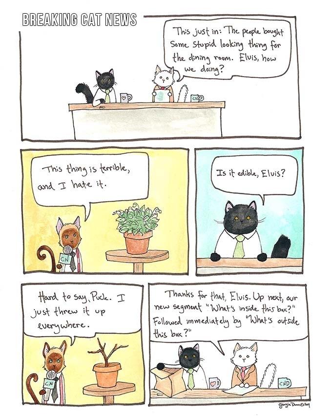 Breaking-Cat-News-04.jpg