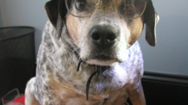 Dog dressed as R. Crumb