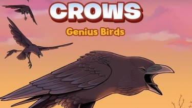 Science Comics: Crows: Genius Birds