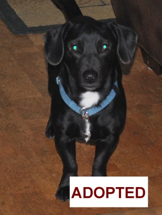 Harry was adopted!