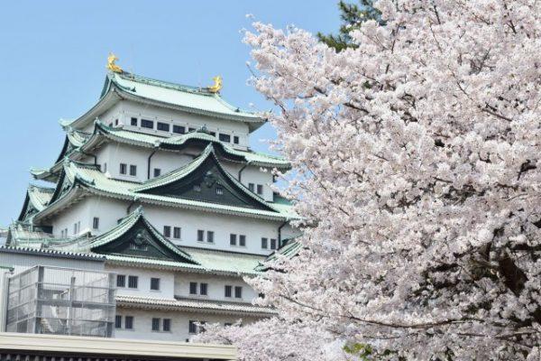 名古屋城、桜