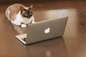 猫とノートPC