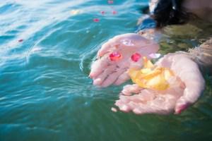 水面に浮いた花びら