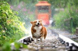 犬の夢の意味