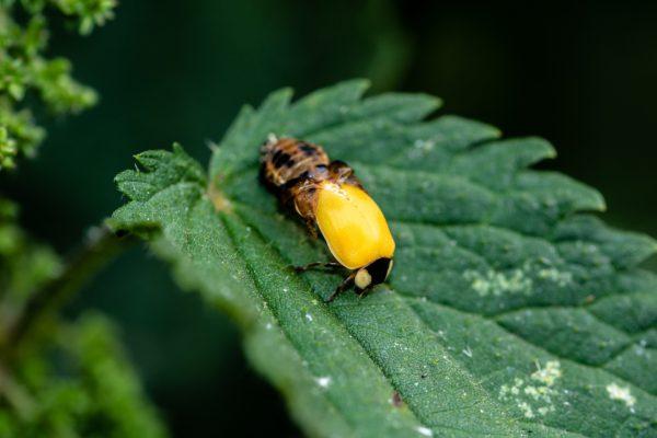 ladybug-3517915_1920