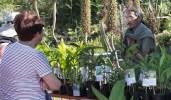 cdf_marche_plantes_2017_jardin_tropical_e
