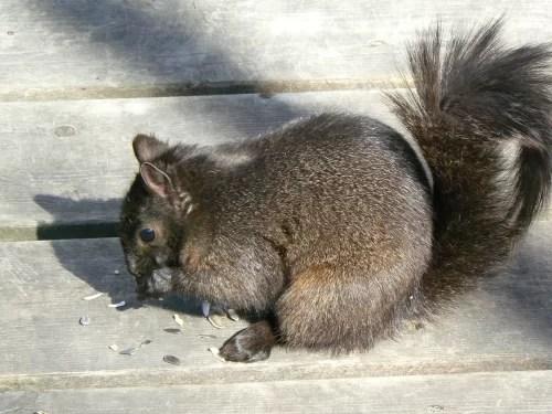 C'est le temps des provisions pour nos écureuils!