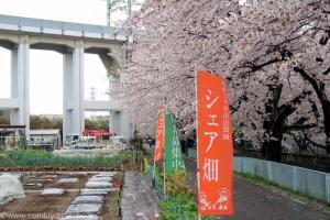 シェア畑と桜並木