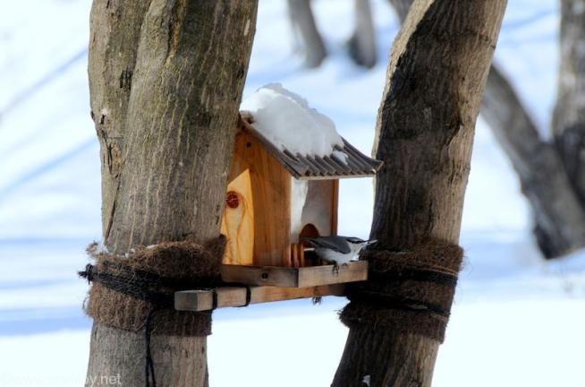 小鳥の朝ごはん