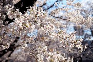 春の日差し