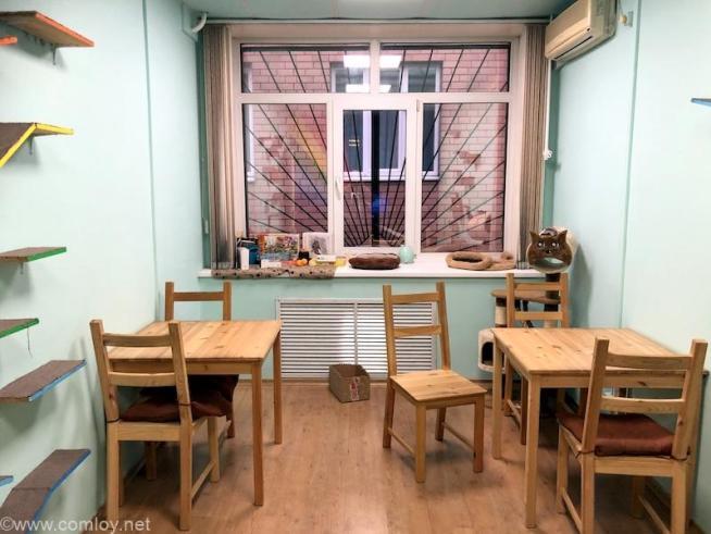 ウラジオストクの猫カフェ・ヴァレリヤニチ(Валерьяныч)店内