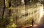balade foret pleine conscience marche meditative