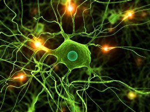 meditation plasticite cerveau effets