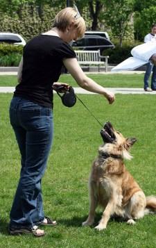 Une éducation canine réussie passe par la constance !
