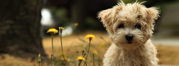 Voici 7 excellentes raisons de dresser votre chien ou chiot !