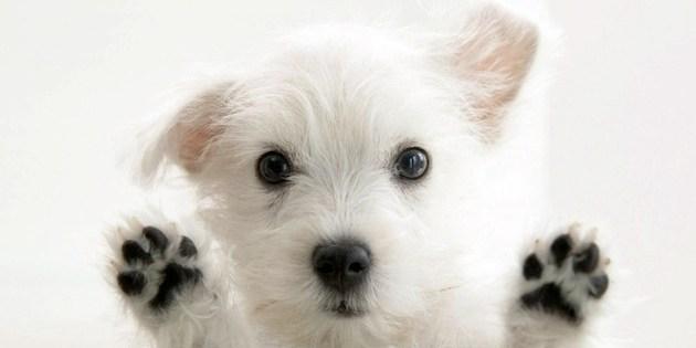 Comment dresser un jeune chien ou chiot ?