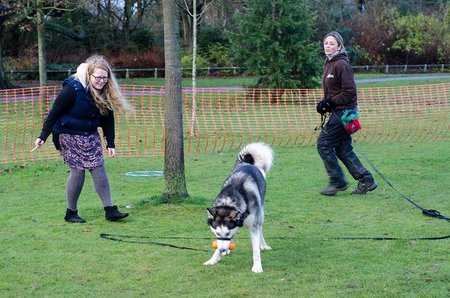 Les cours collectifs sont une option pour dresser votre chien