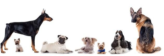 Le dressage canin, une manière de développer une relation harmonieuse avec votre chien