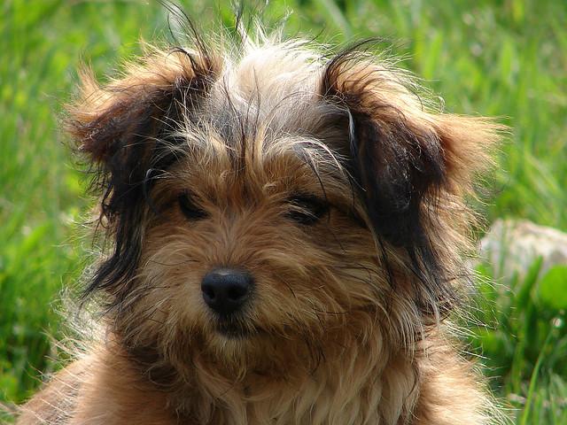Apprenez la propreté à votre chien quel que soit son âge ou sa taille