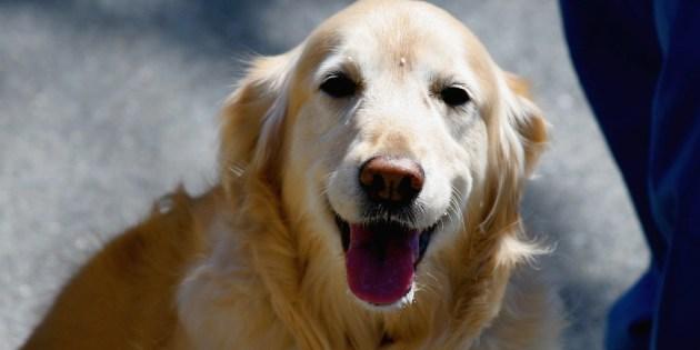 Les ordres de base de l'éducation canine