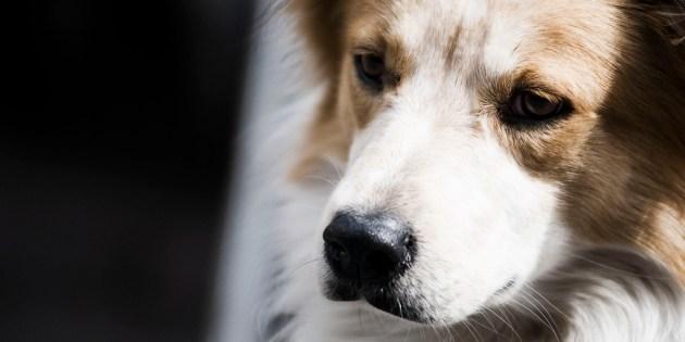 Portrait d'un chien à l'air pensif