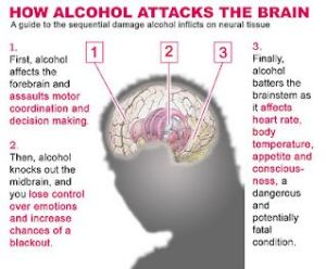 alcohol-attacks-the-brain
