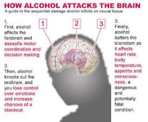 alcohol-attacks-the-brain