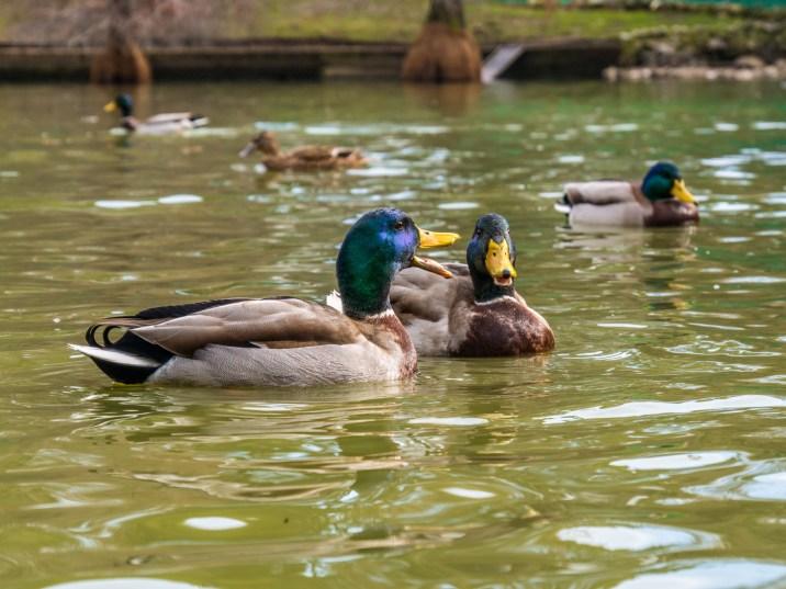 Etang dans le parc del Retiro