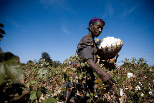 cotton-farming-in-nigeria.png