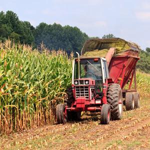 Fortucast Prosperous Farmer Hedger