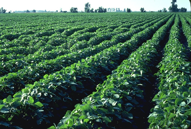 Brazil's top commodities: Brazil is a top exporter of Soybeans.