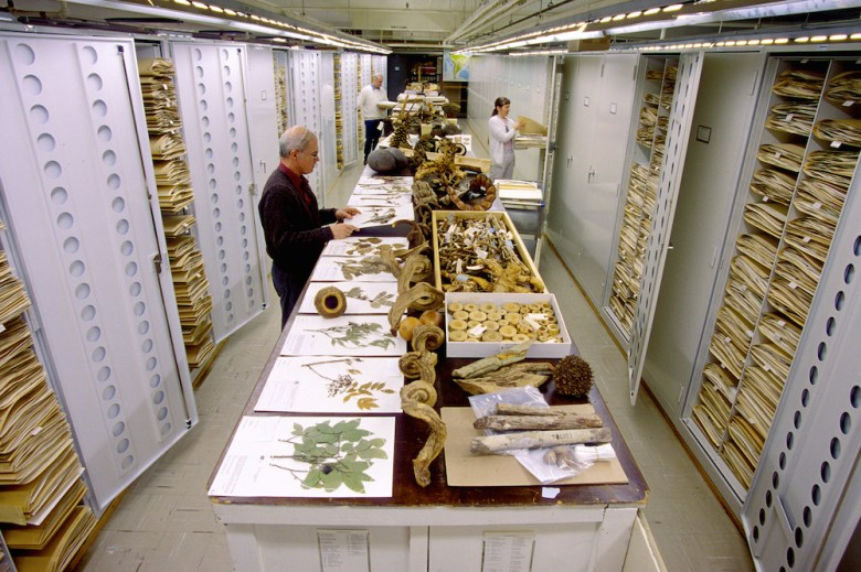 Botanical collections are displayed at the Smithsonian Institution's National Museum of Natural History storage facilities.