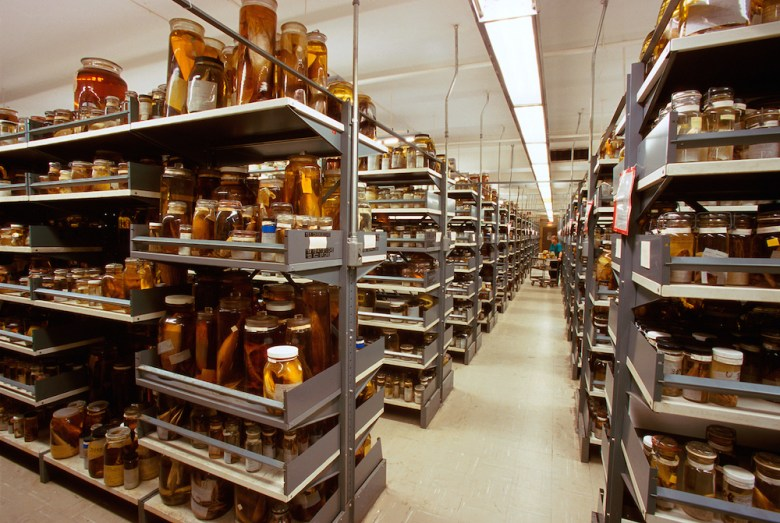 Stacks of wet scientific specimens preserved in jars at the Smithsonian Institution's National Museum of Natural History Department of Zoology.