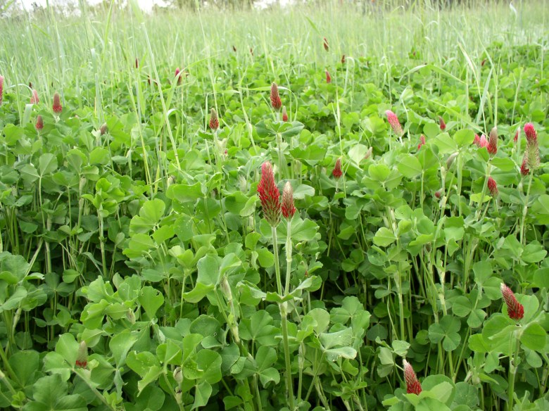 Cover crops blanket a field