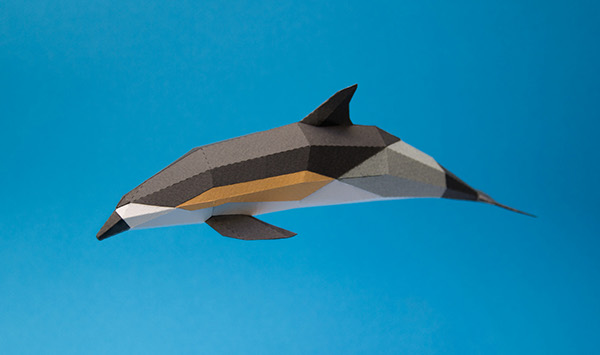 Delfín comun / short-beaked common dolphin (delphinus delphis) by Estudio Guardabosques