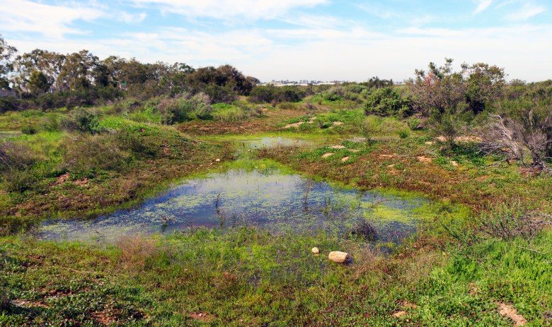 A small cluster of vernal pools between mima mounds near San Diego, California.