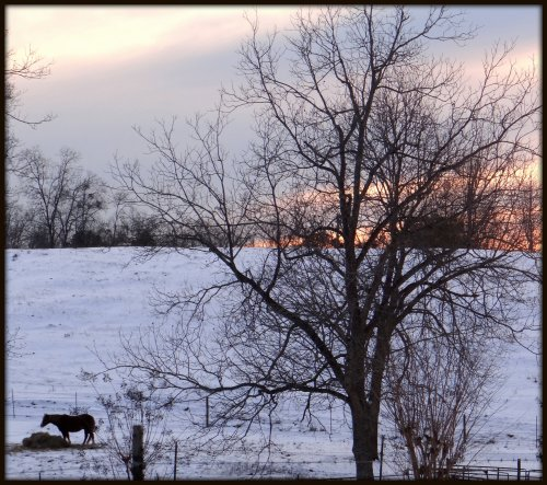 A Winter Pastoral