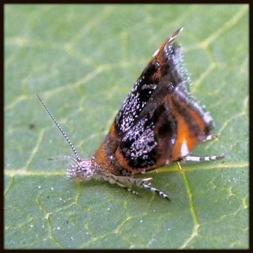 Moth Yoga