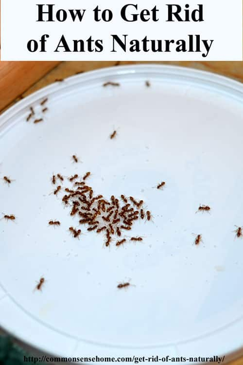 How To Get Rid Of Ants Dog Food Howsto Co