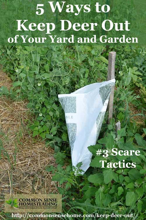 Keep Deer Out Of Garden Lacavedesoyecom