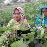 Supporting rural entrepreneurs for social change in Pakistan