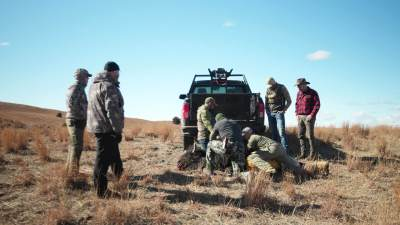 Field Dressing the Buffalo