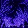 青の洞窟渋谷イルミネーションの混雑状況は?空いている時間と今後の混雑予想は?