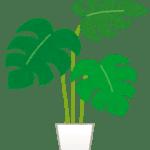 plant_monstera