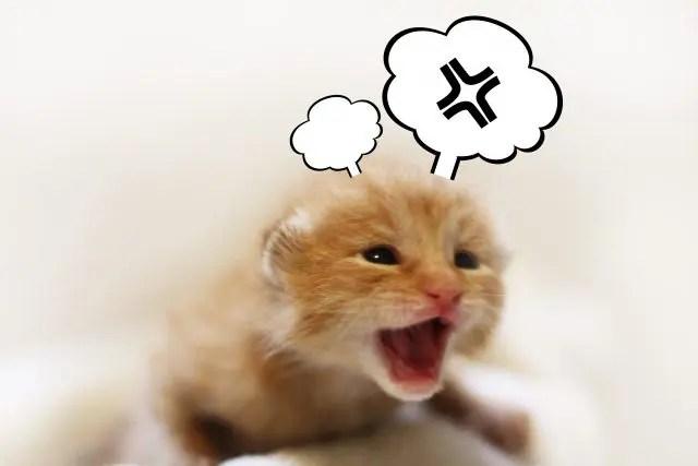 怒りは第2感情